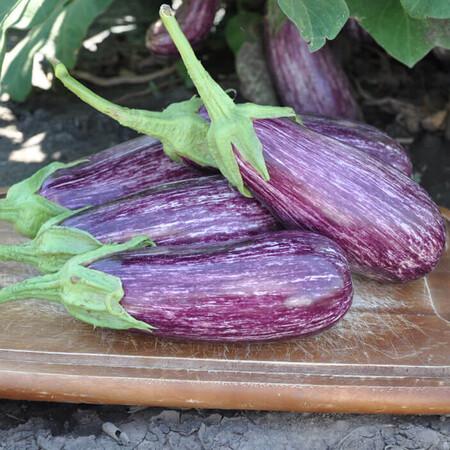 Семена баклажана Лейре F1 Rijk Zwaan от 100 шт, Фасовка: Проф упаковка 100 шт