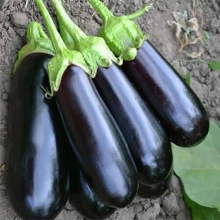 Семена баклажана Миринда F1 Lark Seeds 1 000 шт, Фасовка: Проф упаковка 1 000 шт