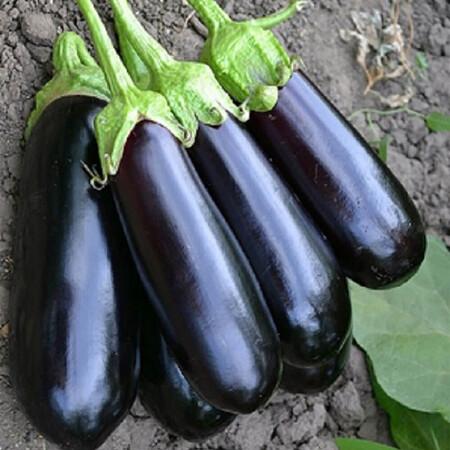 Семена баклажана Нарвал F1 Lark Seeds 1 000 шт, Фасовка: Проф упаковка 1 000 шт