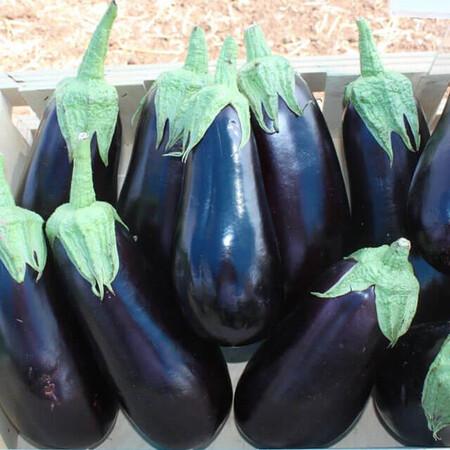 Семена баклажана Вернал F1 Hazera 1 000 шт, Фасовка: Проф упаковка 1 000 шт