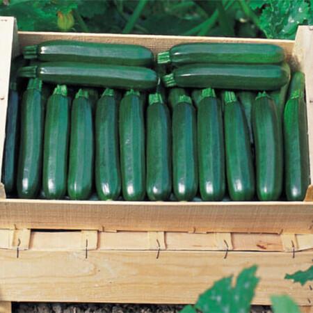 Семена кабачка Кора F1 Clause 500 шт, Фасовка: Проф упаковка 500 шт