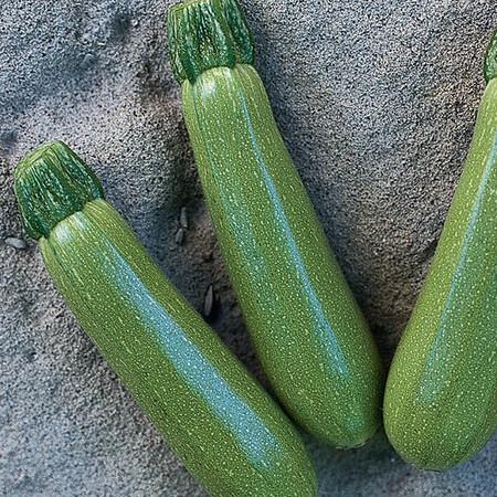 Семена кабачка Мостра F1 Clause 500 шт, Фасовка: Проф упаковка 500 шт