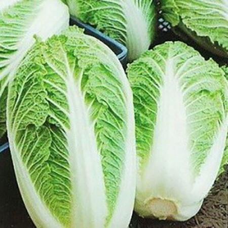 Семена капусты пекинской Пионер F1 Nasko от 500 шт, Фасовка: Проф упаковка 500 шт