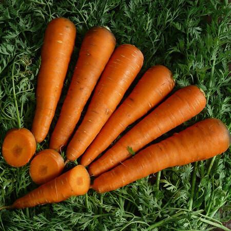Насіння моркви Курода Lark Seeds 500 г, Фасовка: Проф упаковка 500 г