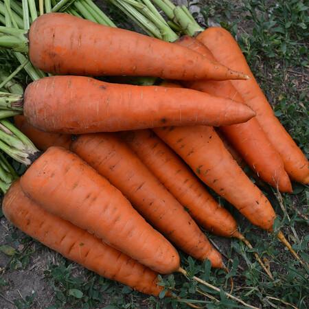Семена моркови Ред Коред Lark Seeds 500 г, Фасовка: Проф упаковка 500 г