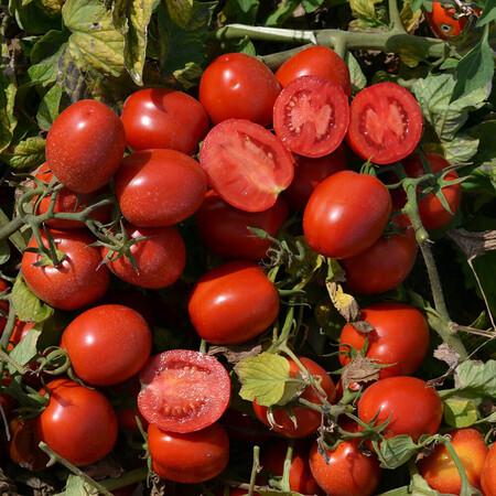 Насіння томату детермінантного 1015 F1 Lark Seeds від 500 шт, Фасовка: Проф упаковка 500 шт