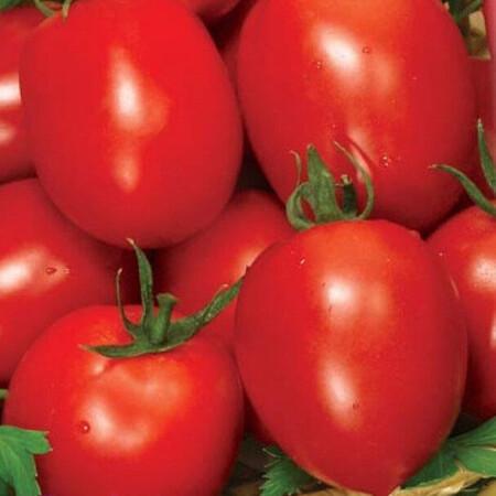 Семена томата детерминантного Рио Фуего Lark Seeds 500 г, Фасовка: Проф упаковка 500 г