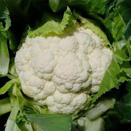Семена капусты цветной Сеул F1 Hazera 2 500 шт, Фасовка: Проф упаковка 2 500 шт