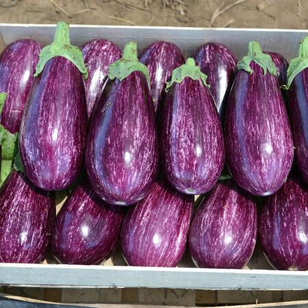 Семена баклажана Рико F1 Lark Seeds 100 шт, Фасовка: Проф упаковка 100 шт