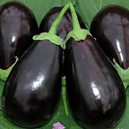 Семена баклажана Визир F1 Yuksel Tohum 500 шт, Фасовка: Проф упаковка 500 шт