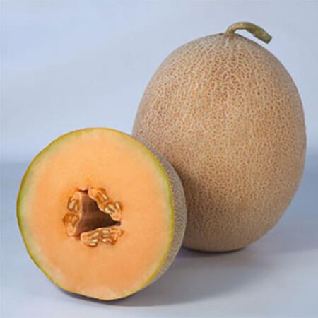 Семена дыни КС 6147 F1 Kitano Seeds от 100 шт, Фасовка: Проф упаковка 100 шт