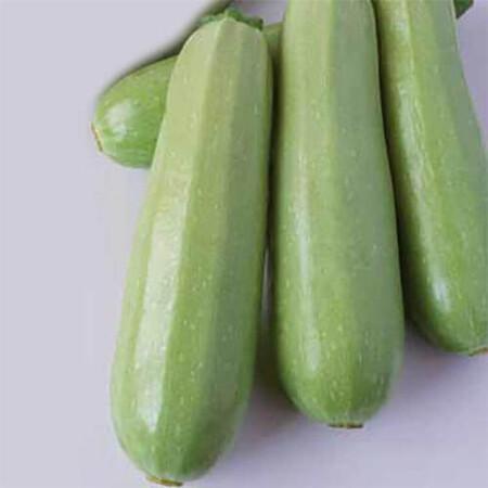 Семена кабачка Алберелло ди Сарцана Sais 50 г, Фасовка: Проф упаковка 50 г