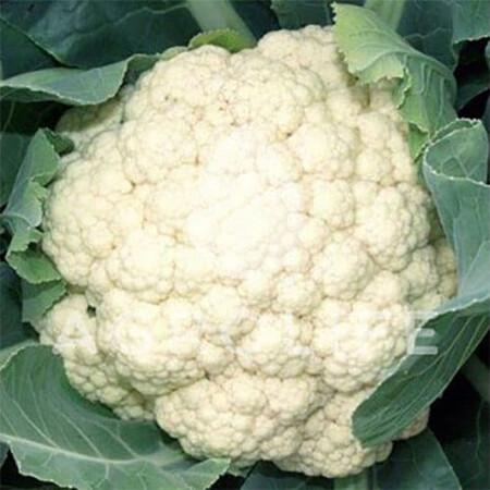 Семена капусты цветной Иглу Hortus от 50 г, Фасовка: Проф упаковка 50 г