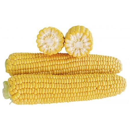 Насіння кукурудзи цукрової 1707 F1 Lark Seeds 2 500 шт, Фасовка: Проф упаковка 2 500 шт