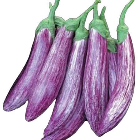Семена баклажана Зебрино F1 Yuksel Tohum 500 шт, Фасовка: Проф упаковка 500 шт