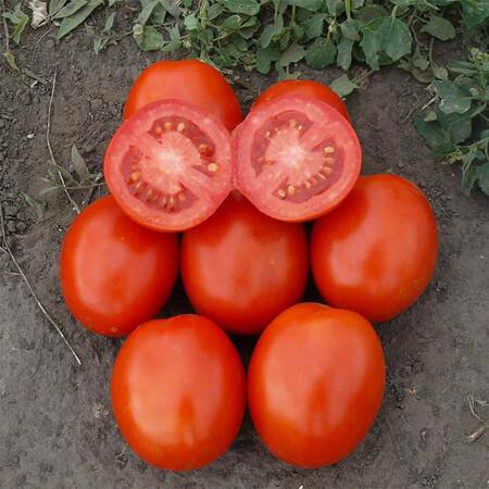 Насіння томату детермінантного 1807 F1 Lark Seeds 5 000 шт, Фасовка: Проф упаковка 5 000 шт
