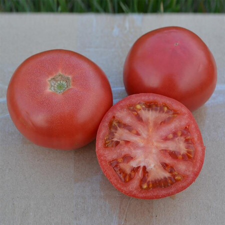 Насіння томату індетермінантного 1810 F1 Lark Seeds від 250 шт, Фасовка: Проф упаковка 250 шт