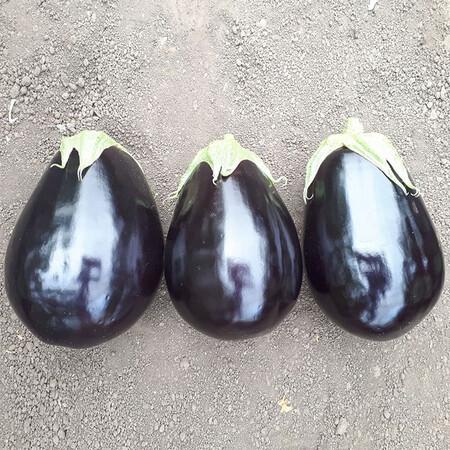 Насіння баклажана Сара (CRX 50129) F1 Cora Seeds 500 шт