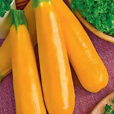 Семена кабачка Голден Hortus от 50 г, Фасовка: Проф упаковка 50 г