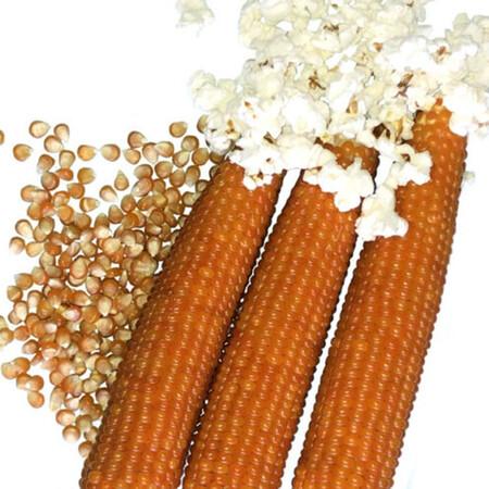 Насіння кукурудзи цукрової Естрелла F1 Lark Seeds 2 500 шт, Фасовка: Проф упаковка 2 500 шт