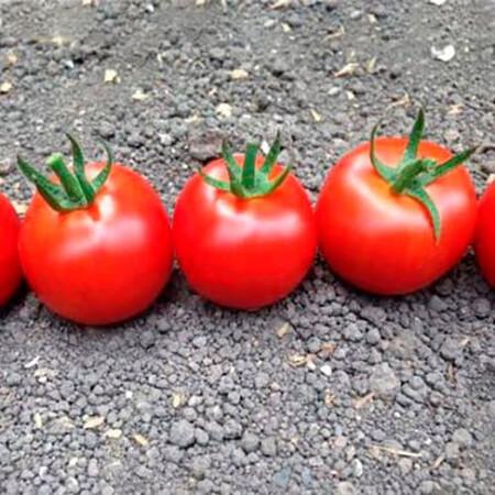 Насіння томату індетермінантного Блейз (1617) F1 Lark Seeds 250 шт, Фасовка: Проф упаковка 250 шт