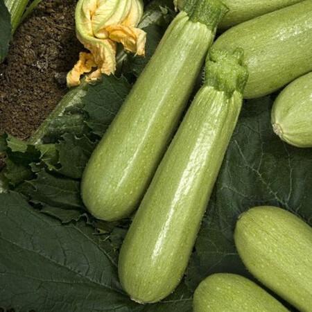Семена кабачка Динар Nasko от 250 шт, Фасовка: Проф упаковка 250 шт